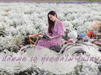 ปักหมุด 10 ทุ่งดอกไม้ ในไทย