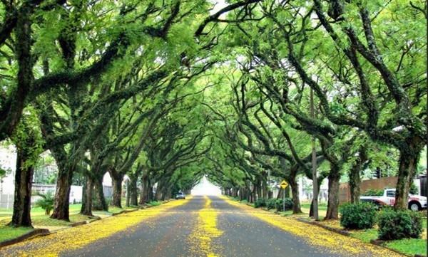 ถนน Rua de Carvalho Goncalo ประเทศบราซิล