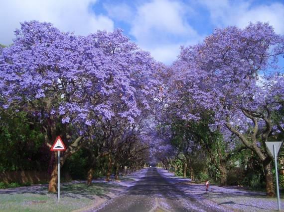 เมืองโจฮันเนสเบิร์ก ประเทศแอฟริกาใต้